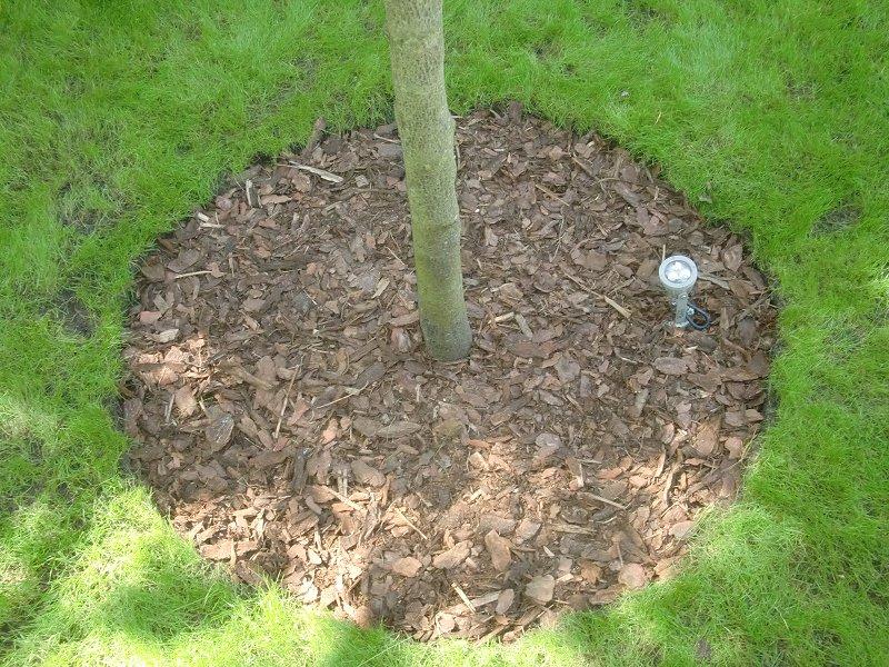 Rasenflächen am Steingarten und Baumscheiben « Wörsty seine Haus