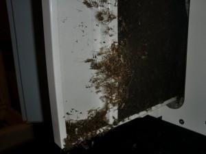 Mückenplage im Filter